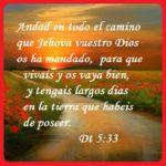 Imágenes con Citas Bíblicas que Invitan a Caminar con Dios