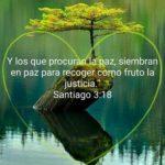 Imágenes con Textos Bíblicos para Encontrar la Paz de Dios