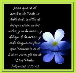 Jesucristo la Vid Verdadera Jesus