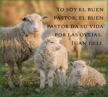 Jesucristo el Buen Pastor Vida